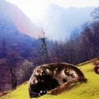 MT_C07_13 In den Alpen